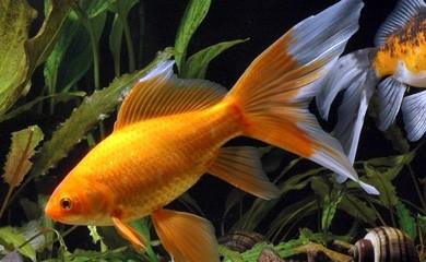 pesce che dorme