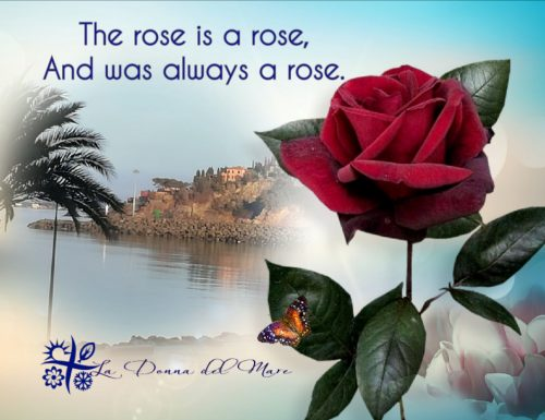 The rose is a rose,