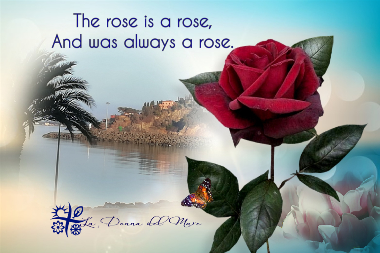The rose is a rose